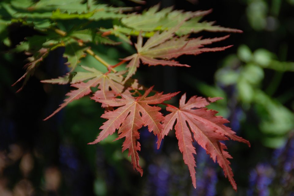 Enjoy the Beauty and Science Behind Fall Color